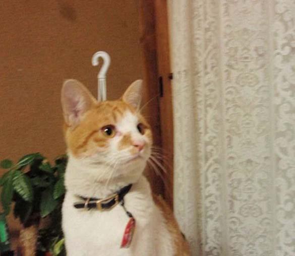 Γάτες που φωτογραφήθηκαν την κατάλληλη στιγμή (8)