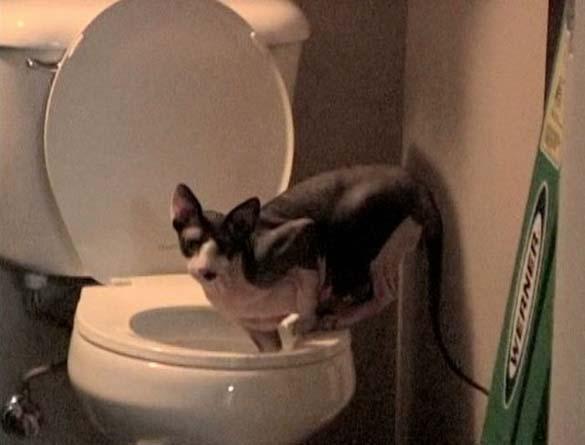 Γάτες που φωτογραφήθηκαν την κατάλληλη στιγμή (14)