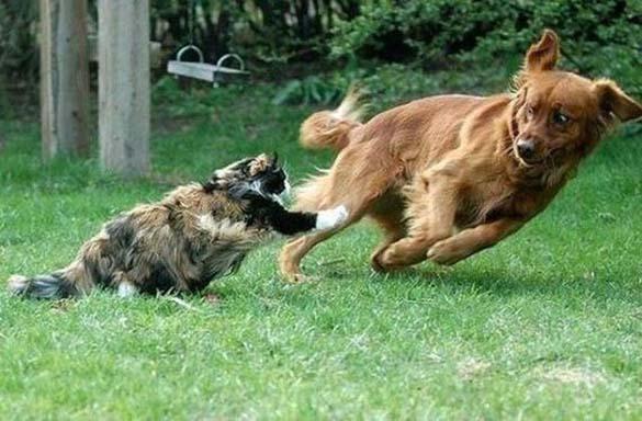 Γάτες που φωτογραφήθηκαν την κατάλληλη στιγμή (16)