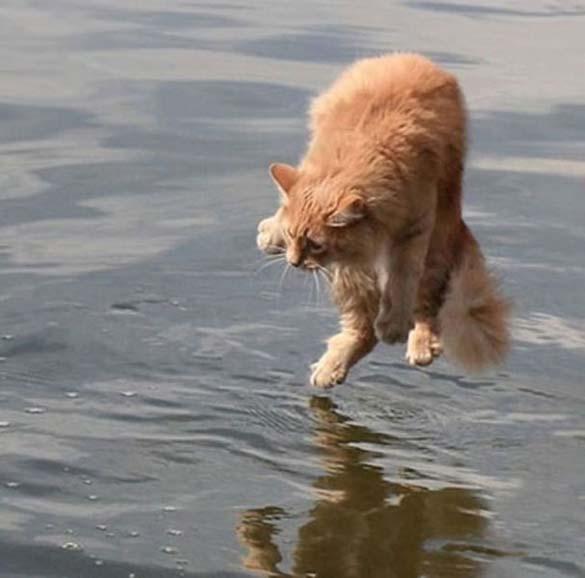 Γάτες που φωτογραφήθηκαν την κατάλληλη στιγμή (17)