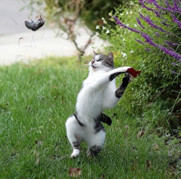 Γάτες που φωτογραφήθηκαν την κατάλληλη στιγμή (18)