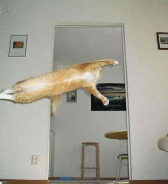 Γάτες που φωτογραφήθηκαν την κατάλληλη στιγμή (20)