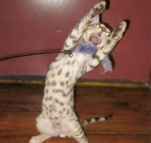 Γάτες που φωτογραφήθηκαν την κατάλληλη στιγμή (23)