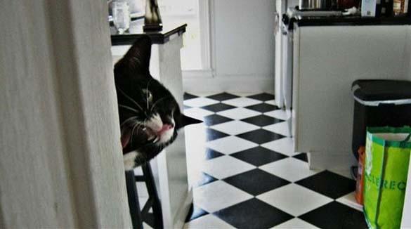 Γάτες που φωτογραφήθηκαν την κατάλληλη στιγμή (24)