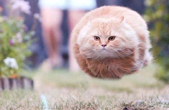 Γάτες που φωτογραφήθηκαν την κατάλληλη στιγμή (25)