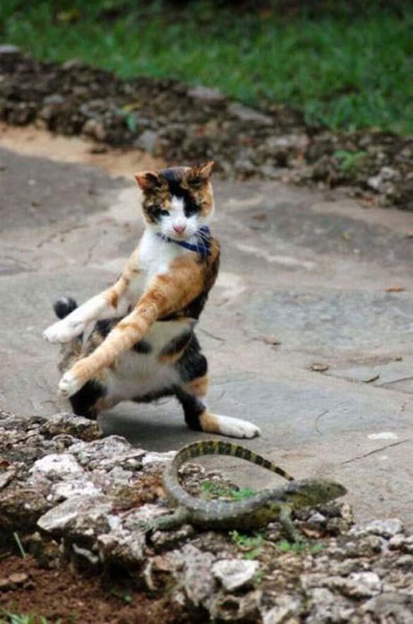 Γάτες που φωτογραφήθηκαν την κατάλληλη στιγμή (26)