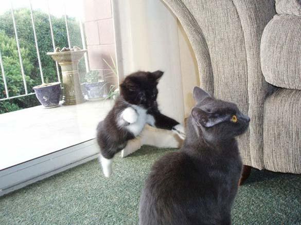 Γάτες που φωτογραφήθηκαν την κατάλληλη στιγμή (27)