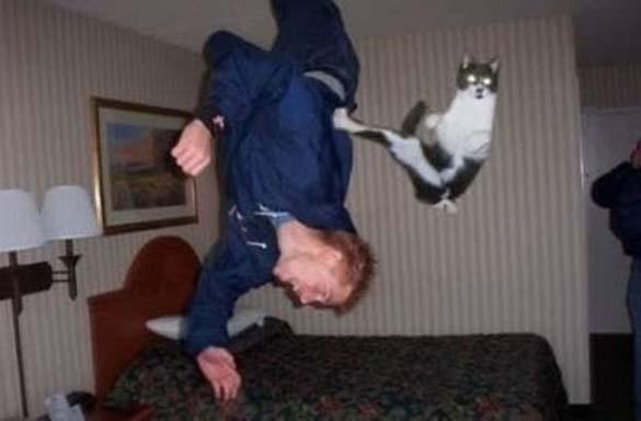 Γάτες που φωτογραφήθηκαν την κατάλληλη στιγμή (28)