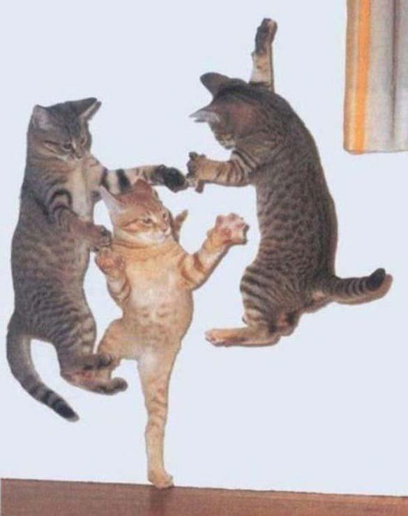 Γάτες που φωτογραφήθηκαν την κατάλληλη στιγμή (31)