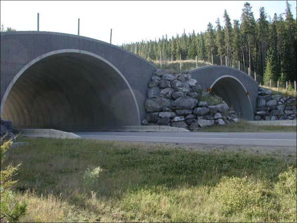 Γέφυρες για ζώα (2)