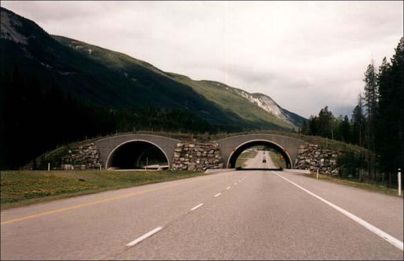 Γέφυρες για ζώα (4)