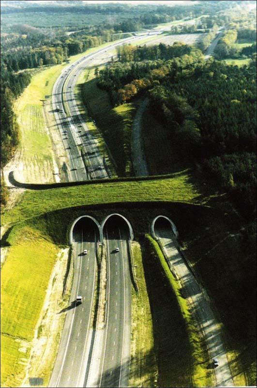 Γέφυρες για ζώα (11)