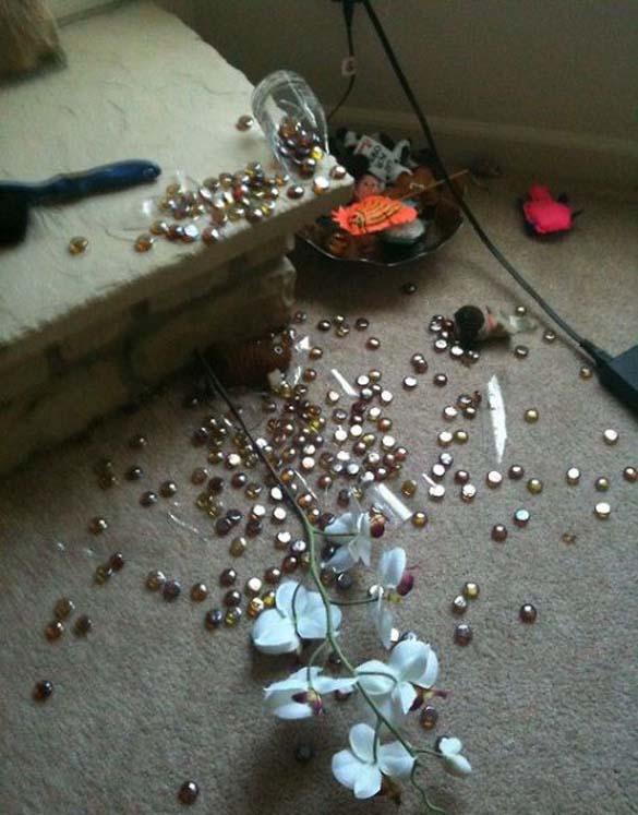 Όταν τα κατοικίδια έχουν καταστροφικές διαθέσεις (12)