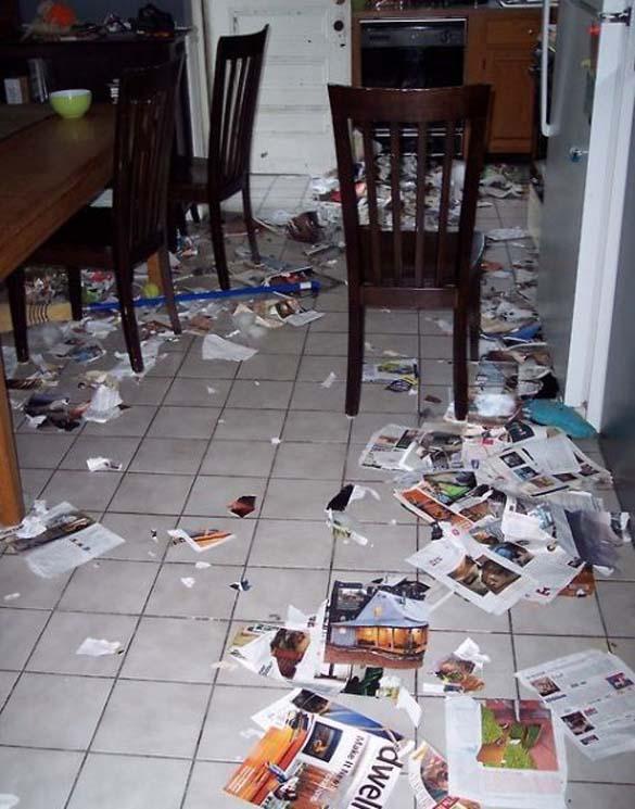 Όταν τα κατοικίδια έχουν καταστροφικές διαθέσεις (16)