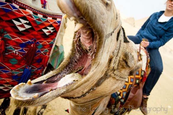 Μέσα στο στόμα μιας καμήλας (6)