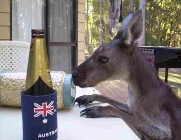 Μόνο στην Αυστραλία (6)