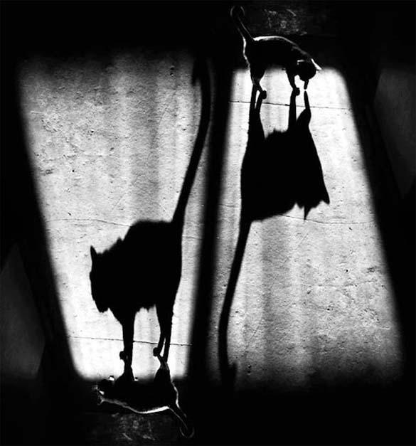 Παίζοντας με τις σκιές (10)
