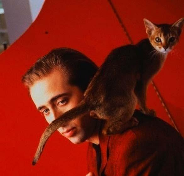 Παράξενα πορτραίτα διασήμων με γάτες (15)