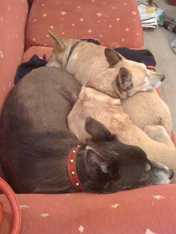 Παράξενες στάσεις ύπνου για σκύλους (3)