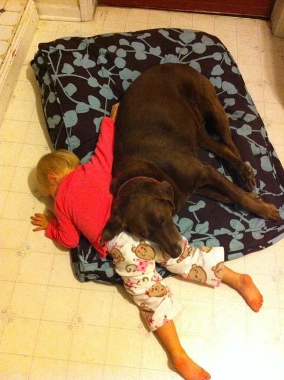 Παράξενες στάσεις ύπνου για σκύλους (18)