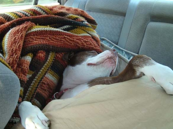 Παράξενες στάσεις ύπνου για σκύλους (19)