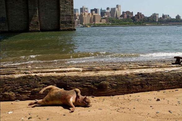 Μυστηριώδες πλάσμα ξεβράστηκε στη Νέα Υόρκη (5)