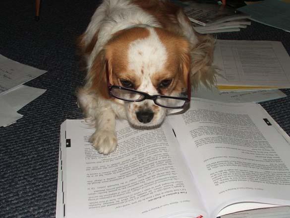 Σκύλοι που λατρεύουν το διάβασμα (1)