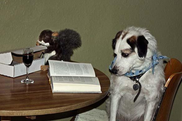 Σκύλοι που λατρεύουν το διάβασμα (2)
