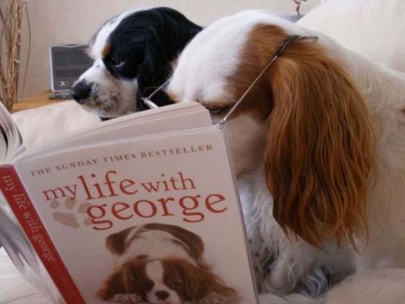 Σκύλοι που λατρεύουν το διάβασμα (3)