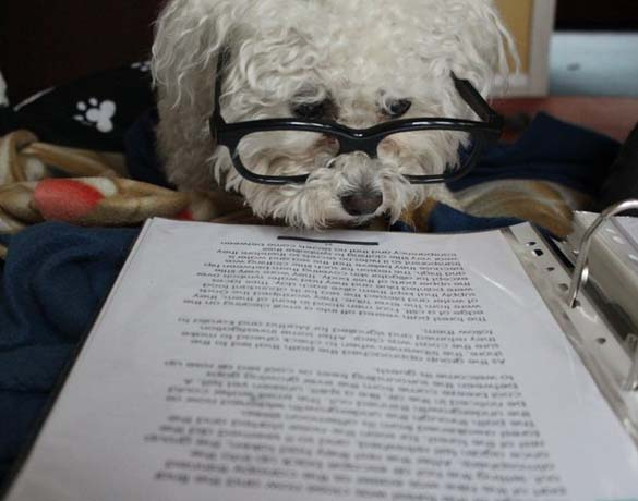 Σκύλοι που λατρεύουν το διάβασμα (4)
