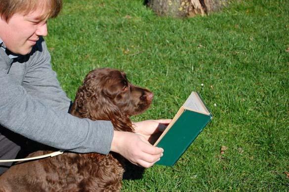 Σκύλοι που λατρεύουν το διάβασμα (5)