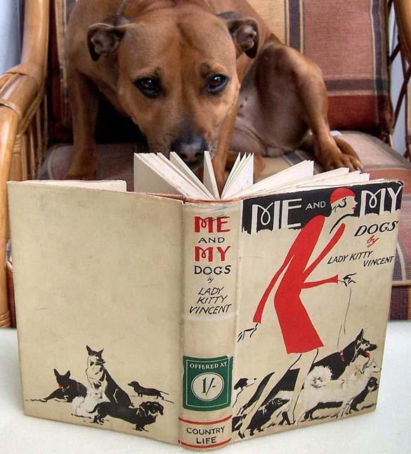 Σκύλοι που λατρεύουν το διάβασμα (6)