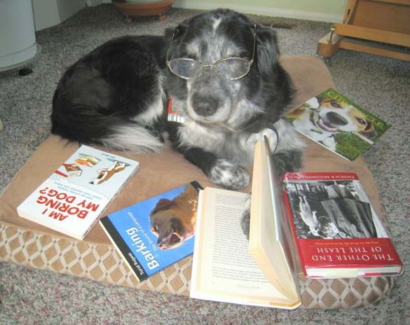 Σκύλοι που λατρεύουν το διάβασμα (7)