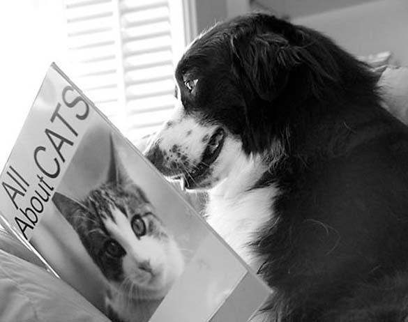 Σκύλοι που λατρεύουν το διάβασμα (8)