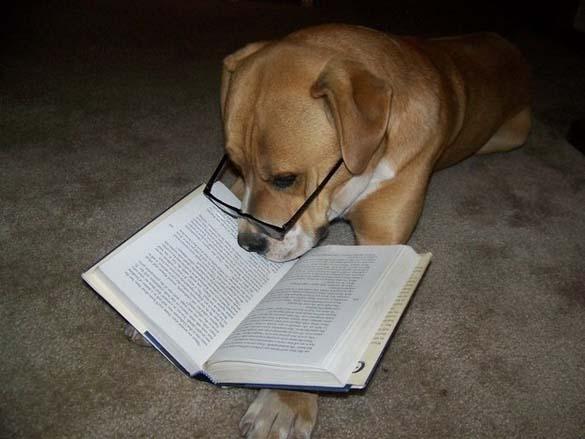 Σκύλοι που λατρεύουν το διάβασμα (9)