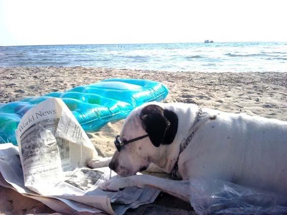 Σκύλοι που λατρεύουν το διάβασμα (10)