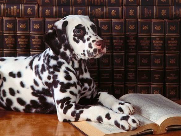 Σκύλοι που λατρεύουν το διάβασμα (11)