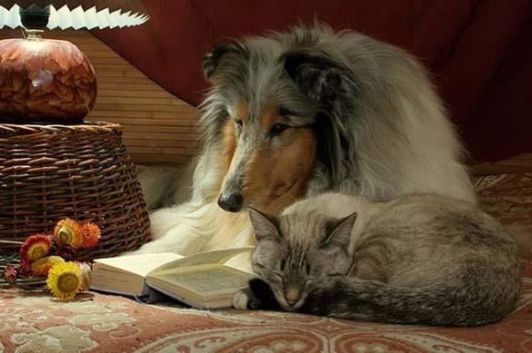 Σκύλοι που λατρεύουν το διάβασμα (12)