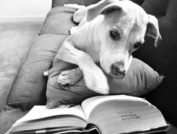 Σκύλοι που λατρεύουν το διάβασμα (13)