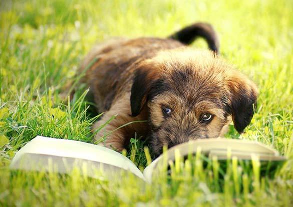 Σκύλοι που λατρεύουν το διάβασμα (15)