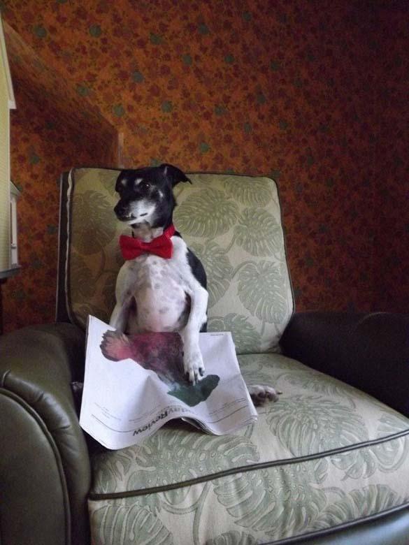 Σκύλοι που λατρεύουν το διάβασμα (16)