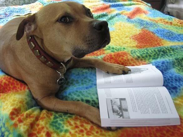 Σκύλοι που λατρεύουν το διάβασμα (18)
