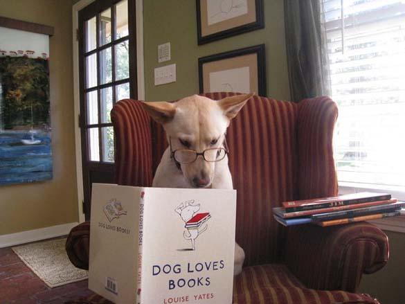 Σκύλοι που λατρεύουν το διάβασμα (20)