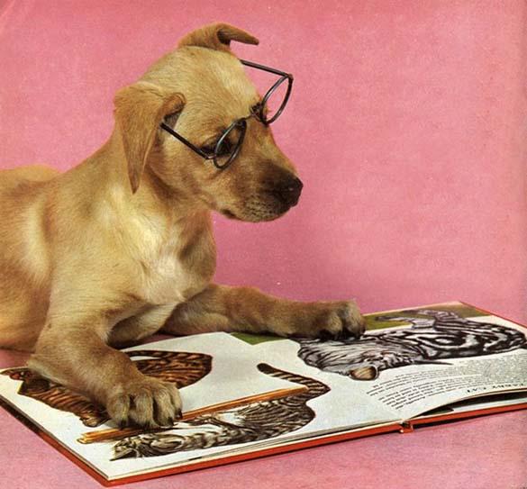 Σκύλοι που λατρεύουν το διάβασμα (21)