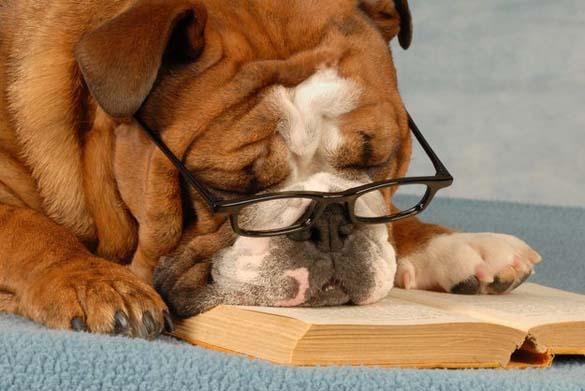 Σκύλοι που λατρεύουν το διάβασμα (22)