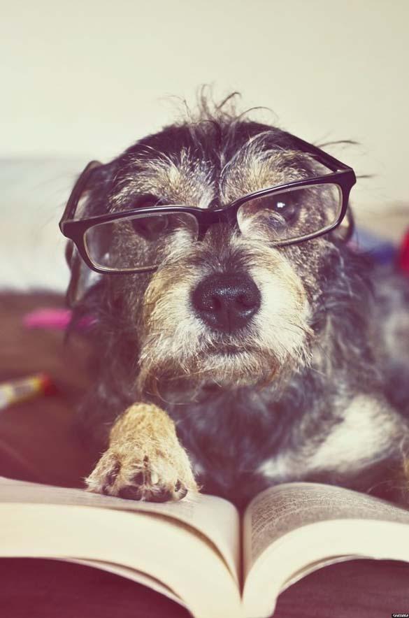 Σκύλοι που λατρεύουν το διάβασμα (23)