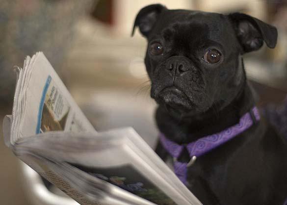 Σκύλοι που λατρεύουν το διάβασμα (25)