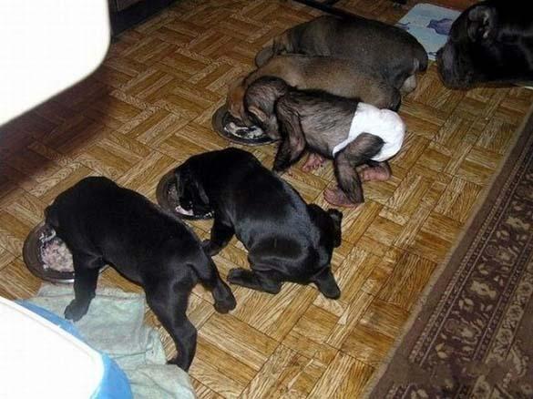 Σκύλος υιοθέτησε μωρό χιμπατζή (2)