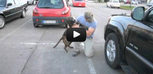 Σκύλος υποδέχεται τον ιδιοκτήτη του μετά από 8 μήνες