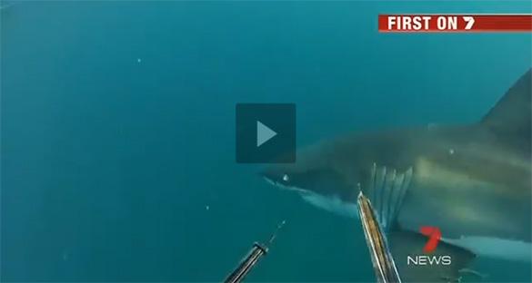 Στενές επαφές με έναν μεγάλο λευκό καρχαρία